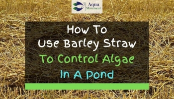 4 Tips On Algae Control With Barley Straw In Ponds