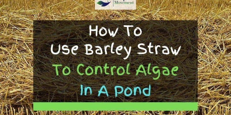 4 Tips On Algae Control With Barley Straw In Ponds