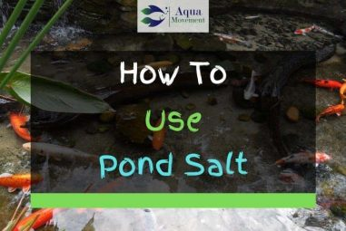 Why, How, And When To Use Pond Salt