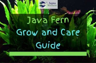 Java Fern – Grow and Care Guide