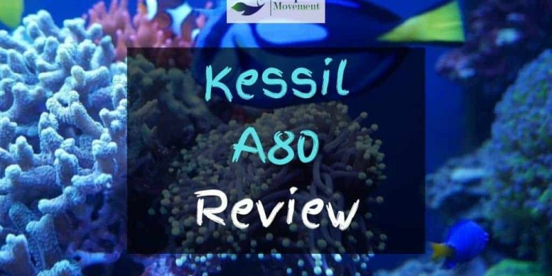 Kessil A80 Review – Worth The Money?
