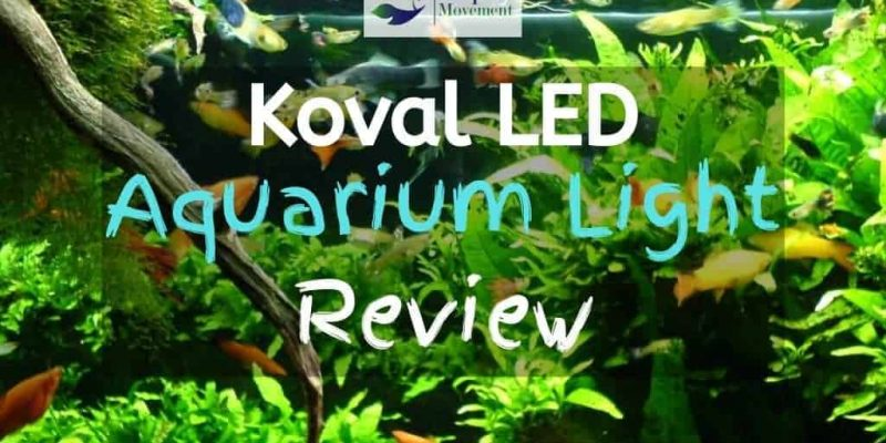Koval LED Aquarium Light Review
