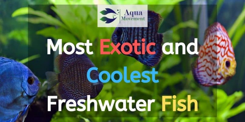 10 Most Exotic and Coolest Freshwater Aquarium Fish (With Pictures)