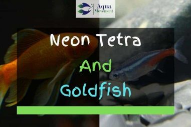 Can Neon Tetra and Goldfish Live Together?