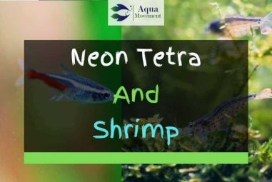 Neon Tetra and Shrimp – Will They Get Along?