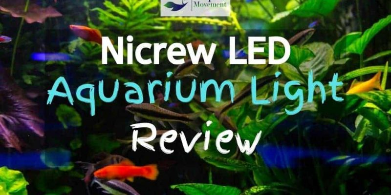 Nicrew ClassicLED Aquarium Light Review