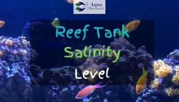 Reef Tank Salinity Level – What's Ideal?