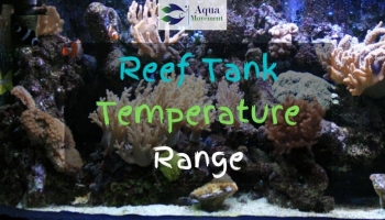 The Ideal Reef Tank Temperature Range
