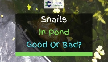 Are Snails In A Pond Good or Bad?
