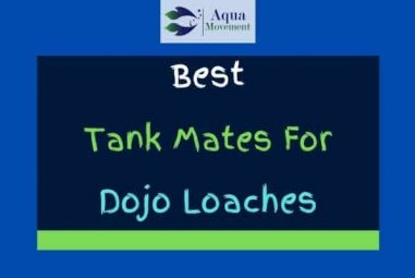11 Best Dojo Loach Tank Mates (With Pictures!)