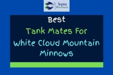 11 White Cloud Mountain Minnow Tank Mates (With Pictures)