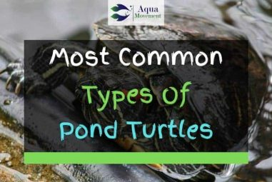 8 Common Types Of Pond Turtles (With Pictures)