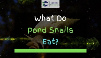 What Do Pond Snails Eat?